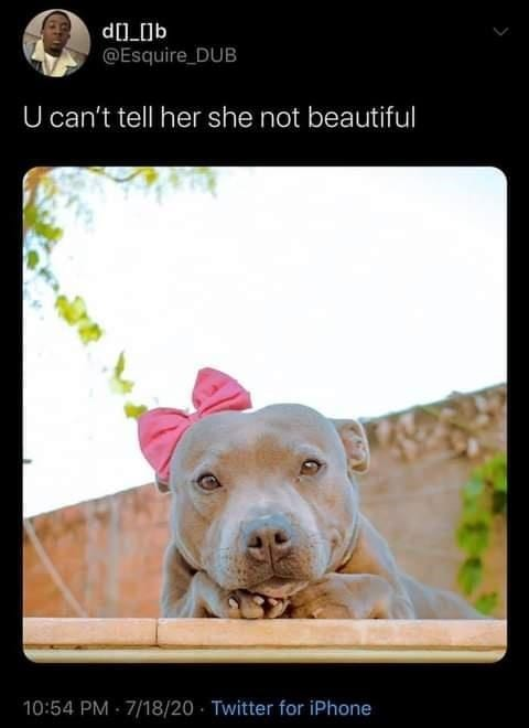 Life with dogs. Very sweet looking grey pit with a pink bow.