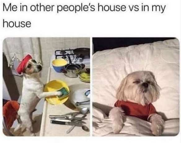 Life with dogs. One pic with a terrier doing dishes. Second pic of dog in bed.