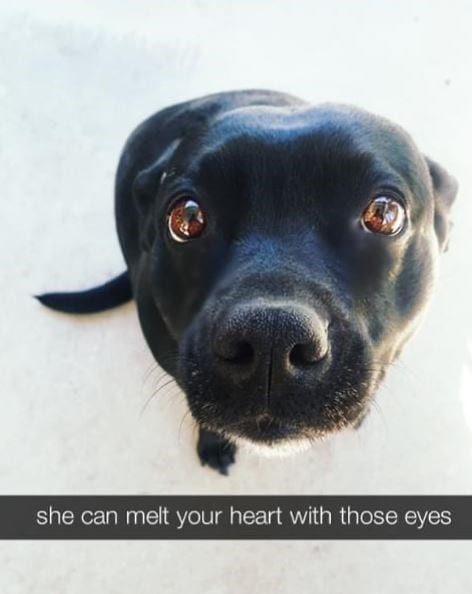 Dog with big brown puppy eyes that are begging for attention.