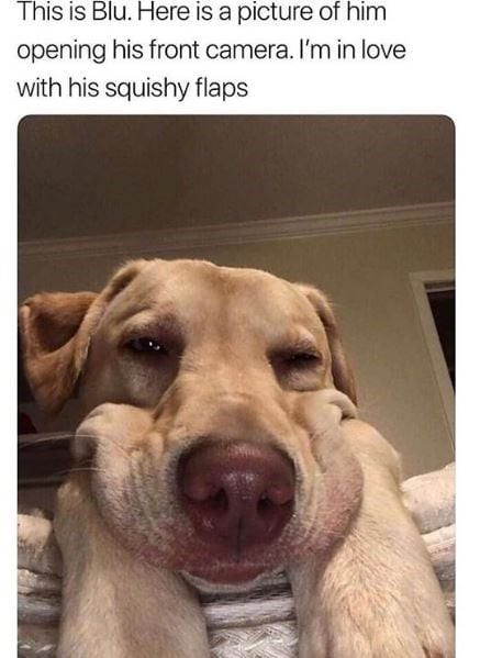 Dog with squishy face.