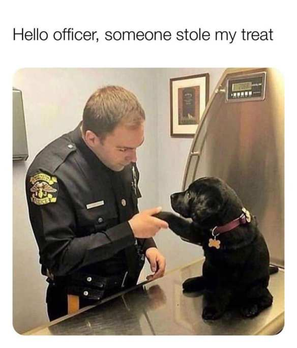 Lab puppy at vet's office with a police officer. Life with dogs.