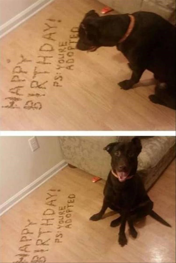 Dog looking at floor that owners spelled out Happy Birthday with dog kibble.