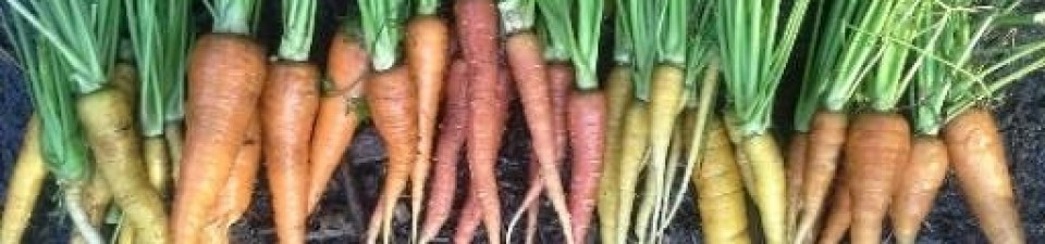 cropped-carrots13.jpg
