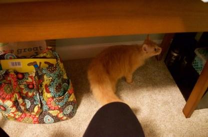 My little helper, Saoirse! (oh btw we got a cat)