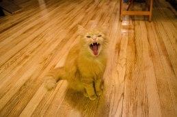 Big yawn!