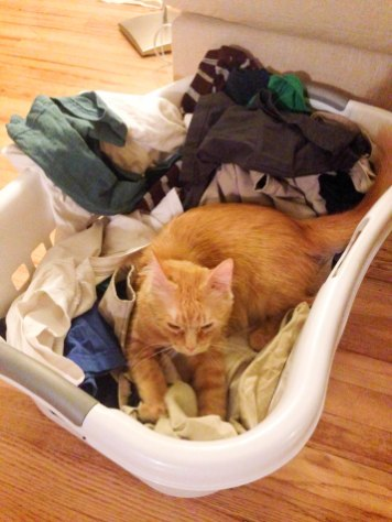 New-found love for laundry