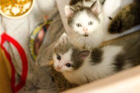 kittens-3