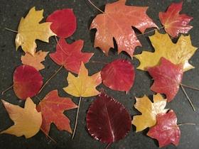 preserve-fall-leaves-done1-280x210 (1)