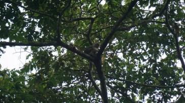 The squirrel monkey were super cute