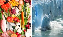 Green Diet: Eat Healthy and Save the Planet