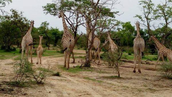 Yankari National Park, Bauchi
