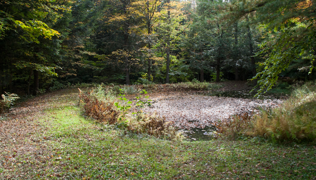 The former ice pond.