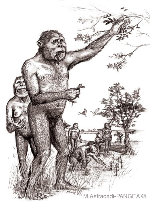 Resultat d'imatges de paranthropus diet
