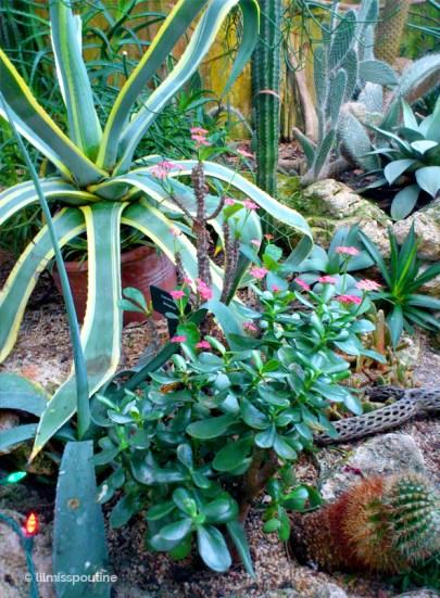 Snake Plant, Cacti, Jade Plant