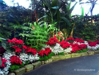 Horticultured Corner