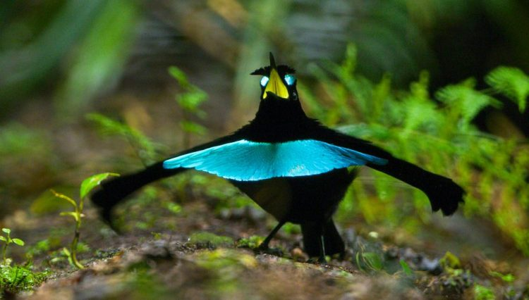 This image has an empty alt attribute; its file name is 01-og-bird-of-paradise-A039_C028_0622IV_0000097-Version-3-edited-1.jpg