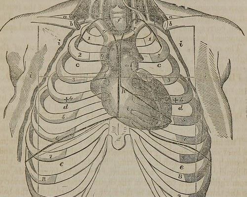14793043053_1e4d423595_heart-organ