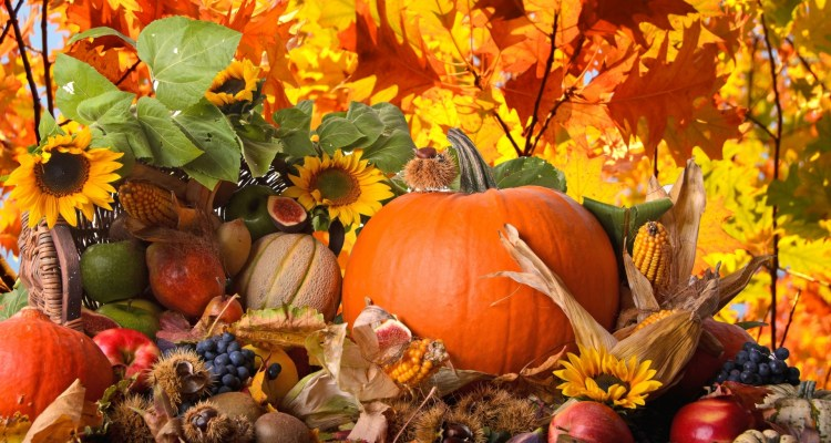 Thanksgiving-Wallpaper