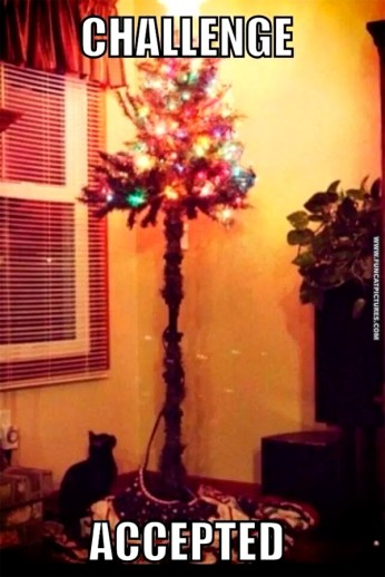 funny-cat-pictures-challenge-accepted-christmas-tree