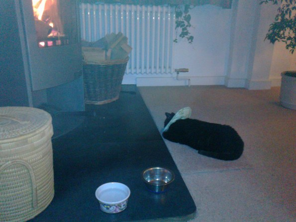 willow by the fire