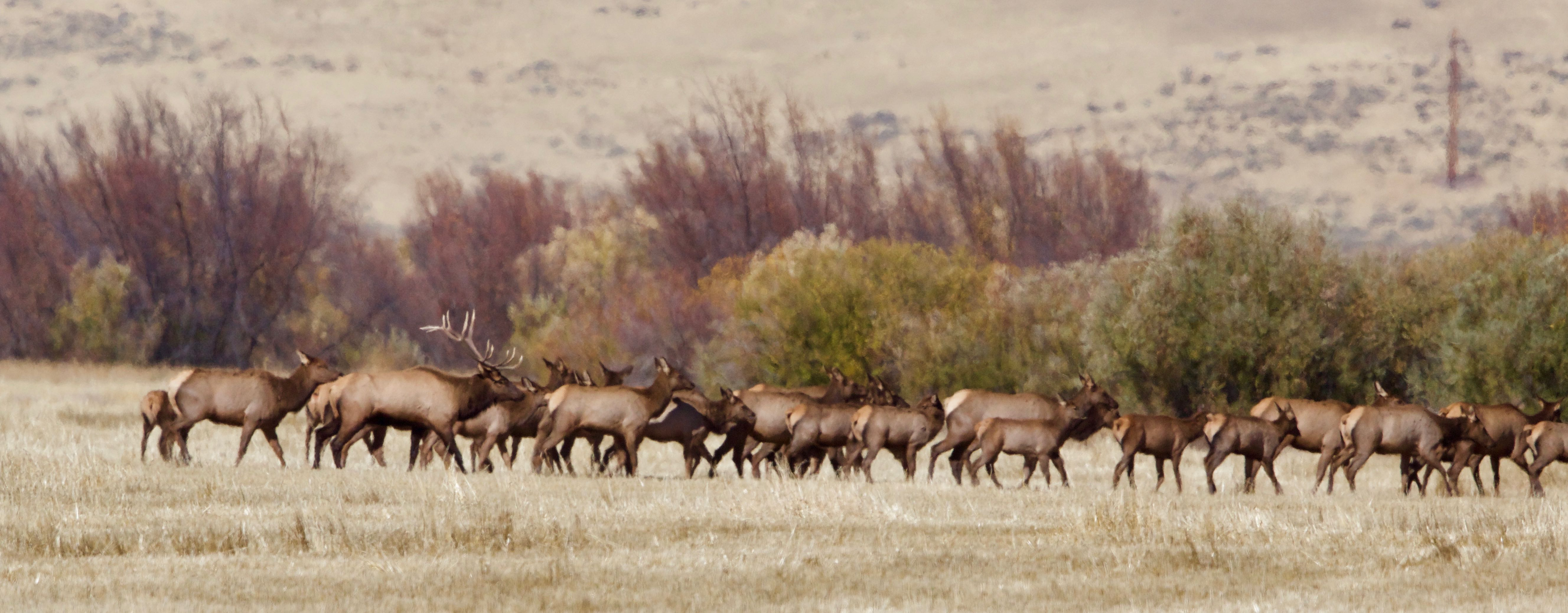 Readers Wildlife Photos Why Evolution Is True