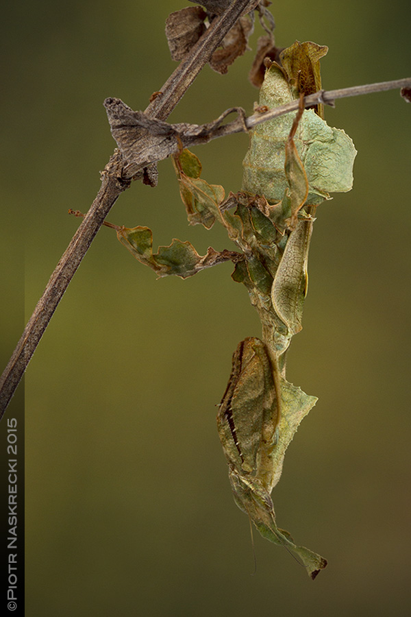 Readers Wildlife Photos Purloined Edition Or You Wont Believe This Stunning Mantis