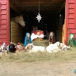 live dogs nativity