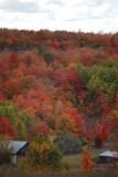 Fall Color on Maple City Hillside
