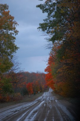 Wet Weathered Fall Road