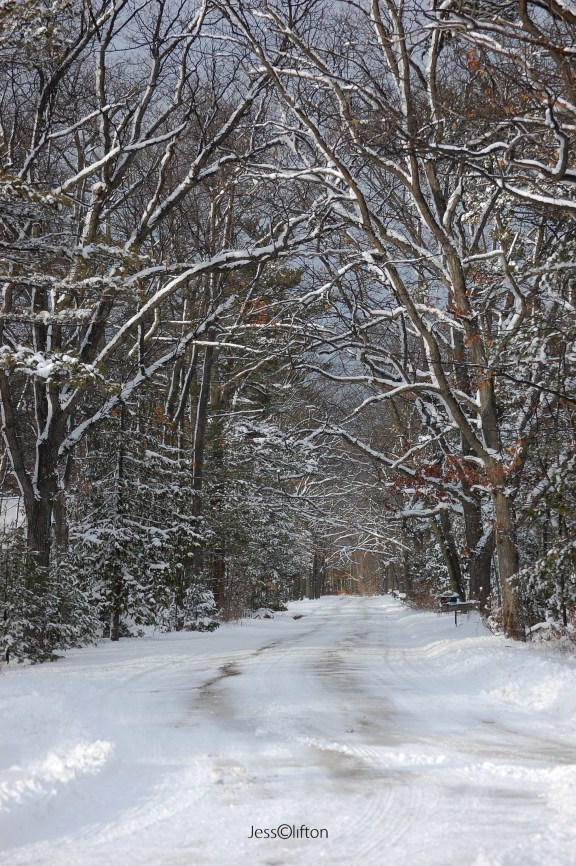 Winter Road Trees