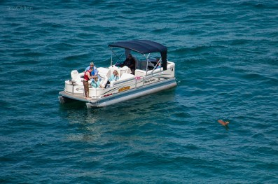 Lake Superior Deer Rescue