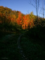 Fall_Path_to_Light
