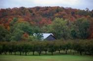 Fall_Tucked_Away_Barn