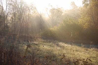 Misty_Fog_Sun_Shadows