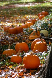 Pumpkins_in_the_Park