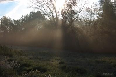 Sunlight_Through_Tree_Fog