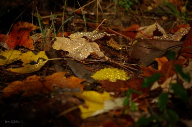 Wet_Fall_Leaves_Droplets