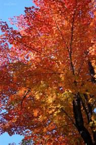 Bright_Red_Tree