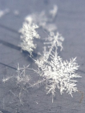 Elegant Snowflake Macro (on the even-more-glamorous backdrop of our trash can lid) :P