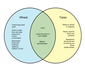 Difference Between Wheat and Tares  WHYUNLIKECOM
