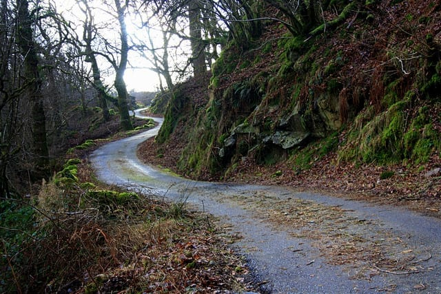 A Path in the Woods - How to Stay Healthy on the Road