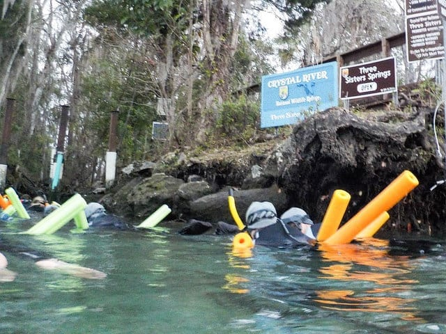 Crystal River in Florida - Swimming with Manatees