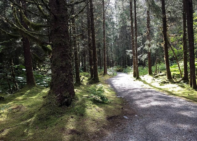 A Path Through the Woods - Cut Down on Walking When You Travel During Third Trimester