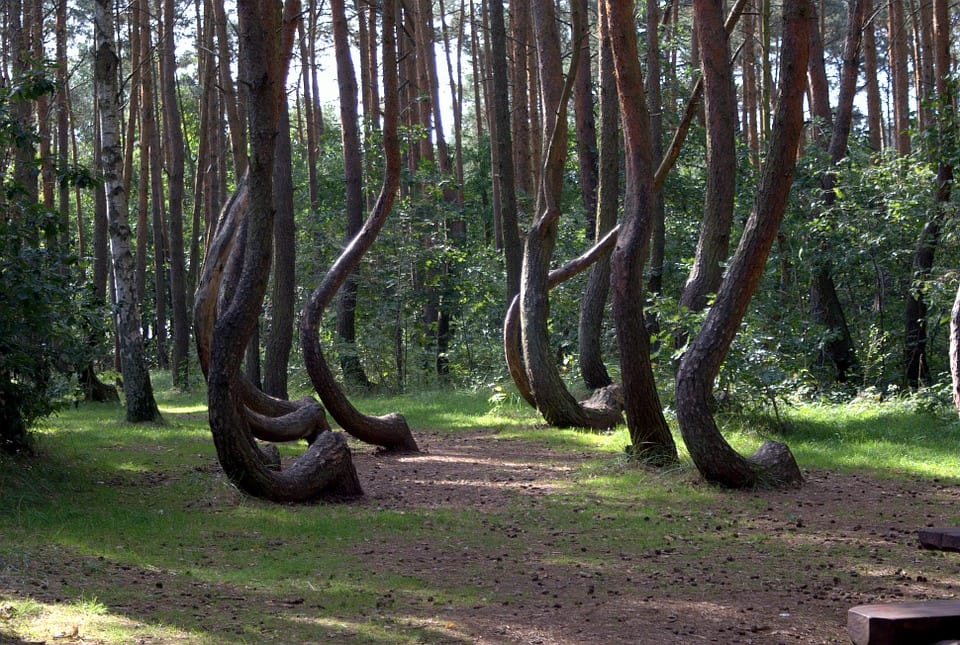 Enchanting Gryfino Forest - Strange Reasons to Visit Poland
