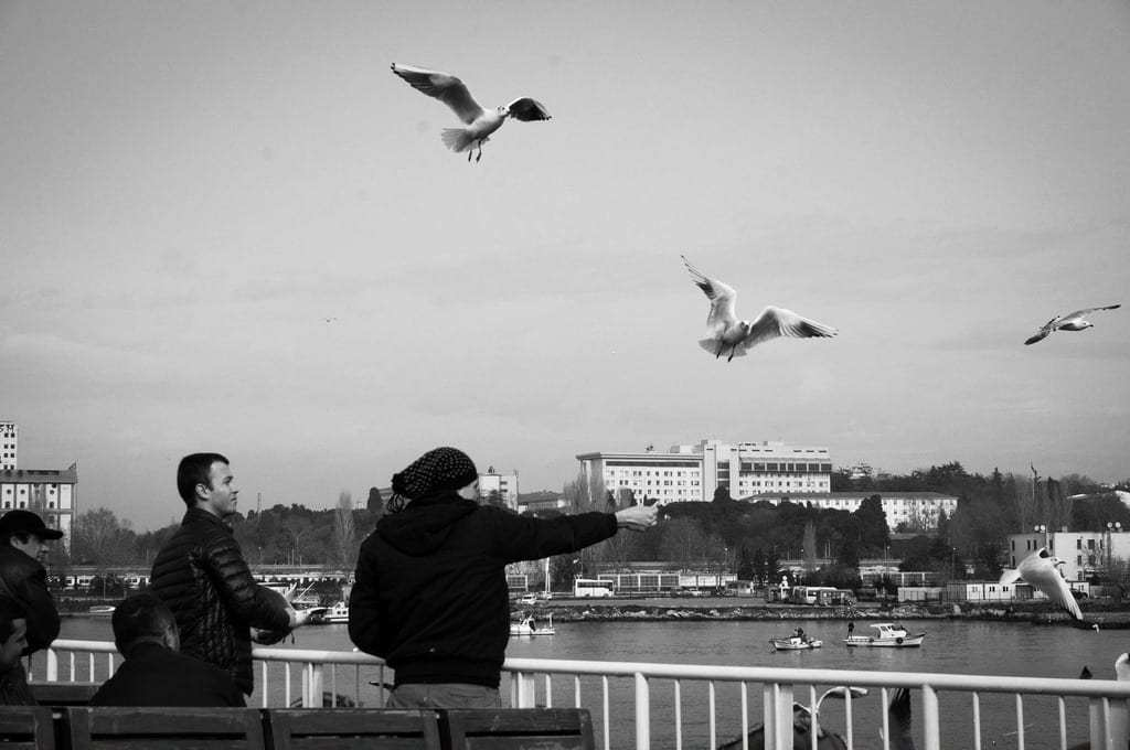 Seagulls Flying Over the Bosphorus in Istanbul - Istanbul and Cappadocia in Beautiful Photos