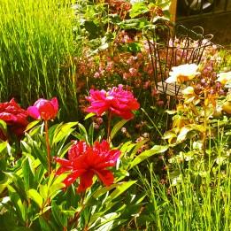 pink flowers La Creuse