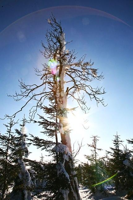 Góry Sowie Drzewo Zimą