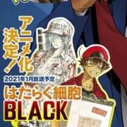 Anime TV Cells at Work!! Pada Bulan Januari 2021 Dicantumkan Sebagai Adaptasi Dari Code Black 23