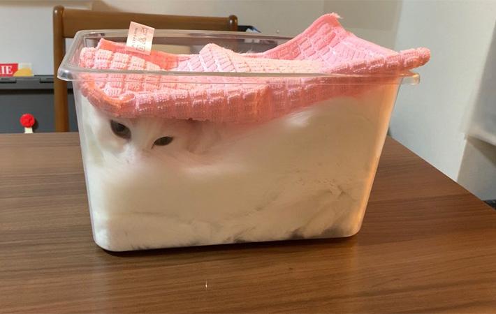 Seorang Majikan Memfermentasikan Kucingnya 4