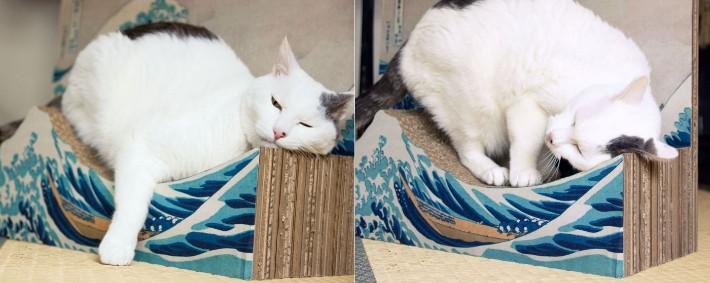 Produk Balok Kayu Paling Ikonik di Jepang Untuk Kucing 5